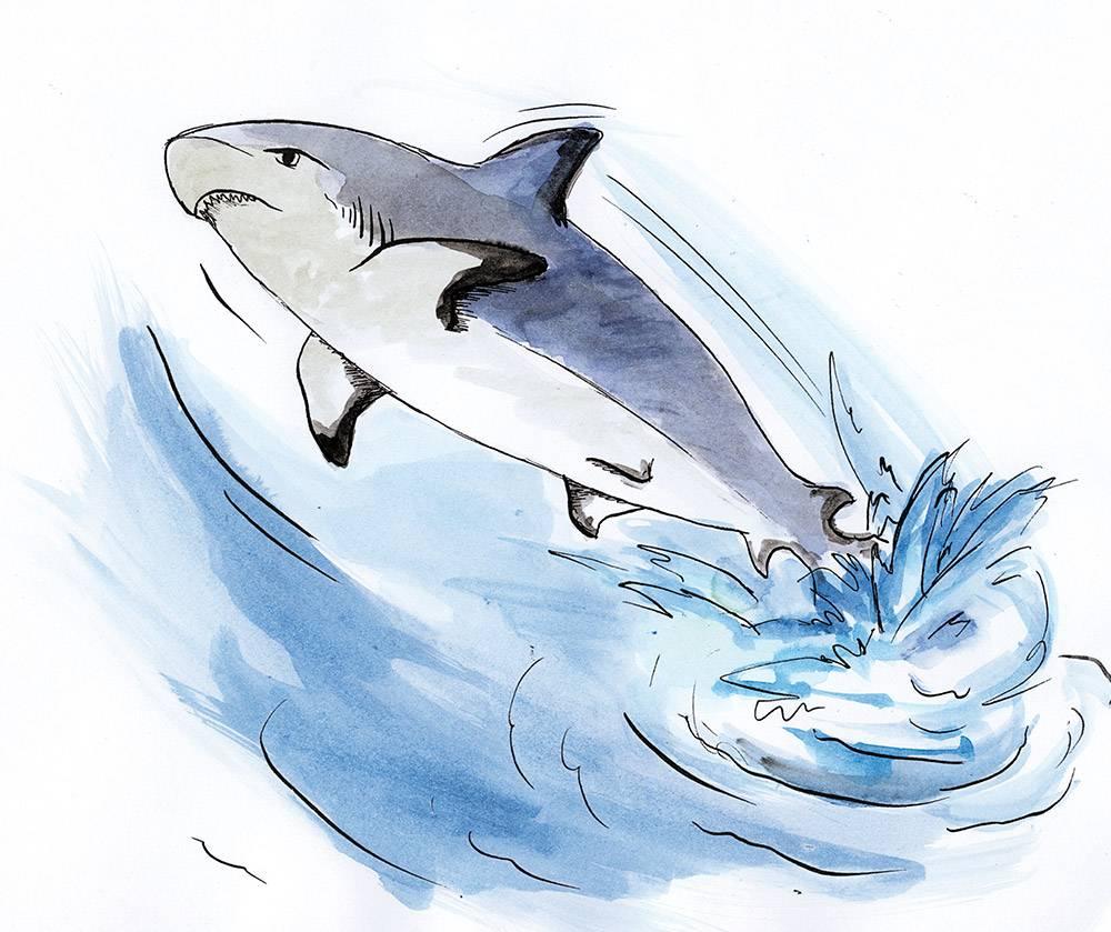 Illustration aus dem Wasser springender Hai in Aquarell und Tusche