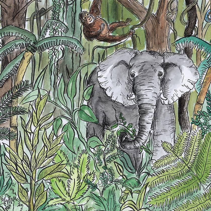 Illustration Urwald mit Elefant und Affe in Aquarell und Tusche